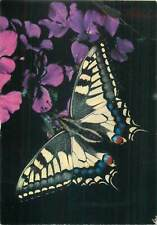 The swallowtail butterfly postcard