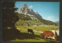 AD7481 Bolzano - Provincia - Corvara in Badia - Panorama - Mucche al pascolo