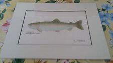 "Rainbow Trout Fish Matted Art Poster Print by Ron Pittard 9"" x 12"" w/ Matting"