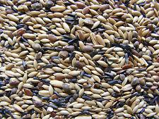Kanarienfutter ohne Rübsen Vogelfutter Züchtermischung 5 kg