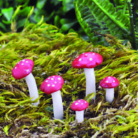 Fairy Garden Toadstools and Mushrooms by Fiddlehead Miniature Fairy Gardens