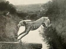 British Army Messenger Dog Training Trench World War 1 7x5 Inch Reprint Photo