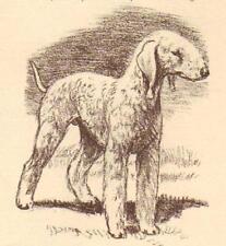 Bedlington Terrier - Vintage Dog Print - 1954 Megargee
