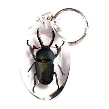 Real Insect in Thailand Allotopus sp. Key Chain Clear Resin LH-107 Hand Made