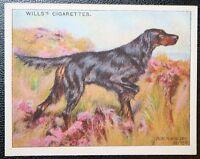GORDON SETTER   Superb Original  Vintage Colour Card  VGC