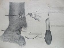 ANTIQUE PRINT C1800'S ENGRAVING DIAGRAM THE NERVE OPERATION NEUROTOMY HORSE ART