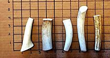 Small Elk/Deer Whole SOFT Antler Dog Chew..Free Shipping-100% Natural & Healthy