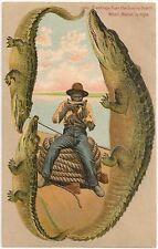 """When Melon is Ripe"" The Sunny South Langsdorf Alligator Border Postcard"