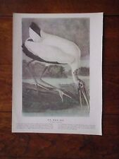 Lot of Ten (10) Vintage Audubon Exotic Bird Prints - Ibis Crane Flamingo Pelican
