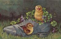 Easter Postcard 1909 Angry Chick & Shy Chick in Shoe Full of Four-Leaf Clover