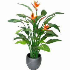 Orange Strelitzia Reginae Seeds Bird Of Paradise Seeds Jardim Bonsai Plant Bird
