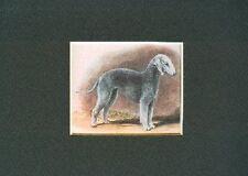 - Bedlington Terrier - Dog Print - Megargee Clearance