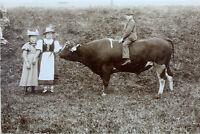 großes Foto Türchau Niederschlesien 1890 Bulle, Rind, Trachten