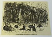 1883 magazine engraving ~ GATHERING MUSHROOMS IN NORMANDY France