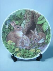 """Wedgwood WASH WITH MOTHER Rabbit Plate 8"""" 20.25cm In Woodland Glades Bunny"""