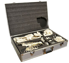 Disarticulated Human Skeleton Full Life Sized 62 Height With Premium Metal