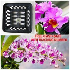 """Vanda Orchid Mash Pot Basket 6"""" Square Hanging Phalaenopsis Paphiopedil 5 FREE 1"""