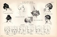 1880 PRINT ~ DRAWING ~ CONTOURS OF THE HEAD ~ MALE FEMALE HEAD & NECK HUMAN SKUL