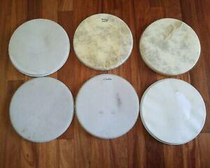"Banjo Heads,  11"" Diameter, Set of 6"