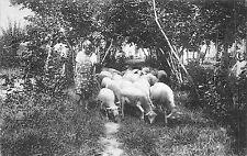 BF4641 sheep mouton un coin de la nouvelle terre france
