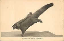 1920s Printed Pc Australian Flying Phalanger Marsupial Field Museum Chicago
