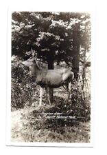 Vintage Postcard VIRGINIA DEER BANFF NATIONAL PARK Photo Alberta Canada