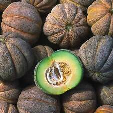 Melon Extra Early Hanover  Exceptionally Delicious 20+ Seeds EARLY COMBINED SHIP