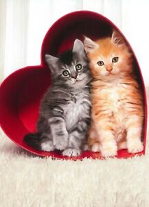 Avanti funny greeting card Valentine Valentine's love kittens hugs