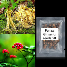 50 x Panax Ginseng Seeds Asian Wild Planting Chinese Medicine Herbal Seeds L7