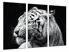 Cuadro Moderno Fotografico Animales Salvajes, Tigre Blanco,97x62cm ref. 26417