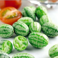20 Mexican Miniature Watermelon Thumb-sized Water Melon New Rare Seeds TT046