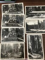7 RPPC SEQUOIA NATIONAL PARK, CA c1940s Real Photo Postcard