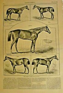 Some American Race Horses, by Henry Stull, w/text Vintage 1881 Antique Print #2