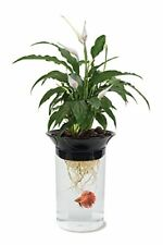 Penn Plax Aquaponic Betta Fish Tank Promotes Healthy Environment for Plants and