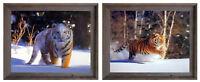 Siberian Tiger on Snow Wild Animal Two Set 16x20 Framed Wall Decor Art Print