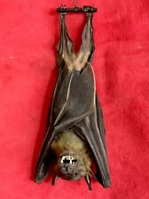 Awesome Vampire! Real bat. Taxidermy. Wicca Spell Ritual