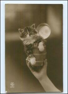 Y16201/ Katze Kätzchen schöne Foto AK 1917