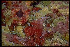 452016 Ojo De Una Galápagos gallineta A4 Foto Impresión