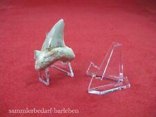 12 Stück kleine glasklare Dekoständer Mineralienständer Fossilienständer 1556