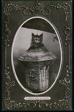 Tabby Hairy Cat Kitten in Chinese Lamp original vintage old 1910s photo postcard