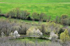 """"""" green curves """"  photo d'artiste tirage papier - arbre nature"""