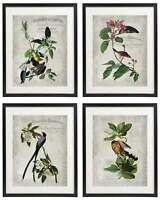 Vintage Bird & Botanical No.9 Home Decor Wall Art Print Set of 4 Prints UNFRAMED
