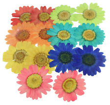 Pressed flowers daisy mixed pack, red green orange turquoise yellow blue pink