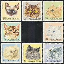 Hungary 1968 Cats/Pets/Domestic Animals/Nature/Kitten 8v set (n39951)