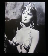 Gina Lollobrigida #2 8x10 photo, sexy 1950s-'60s Italian & Hollywood movie star