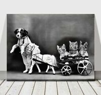 CUTE VINTAGE B&W Dog Dressed Up With Kittens - CANVAS ART PRINT POSTER - 24x18""
