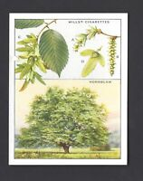WILLS - TREES - #23 HORNBEAM