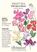 Old Spice Blend Sweet Pea Seeds - 3 grams - Lathyrus