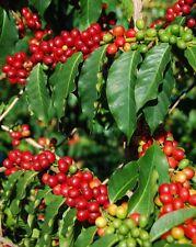 2.5 lbs Ethiopian Natural Sidamo Grade 4 Guji Fresh Medium Roast Coffee Beans