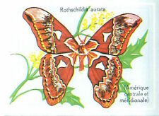 IMAGE CARD 60s Rothschildia Aurota Lepidoptera Amérique Papillons Insectes